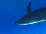Trailer | Dolphin Discovery Videos