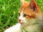 Trailer | Kitten Corner Videos