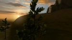 Trees in Breeze | Overgrowth Videos